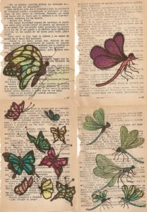 papallones2